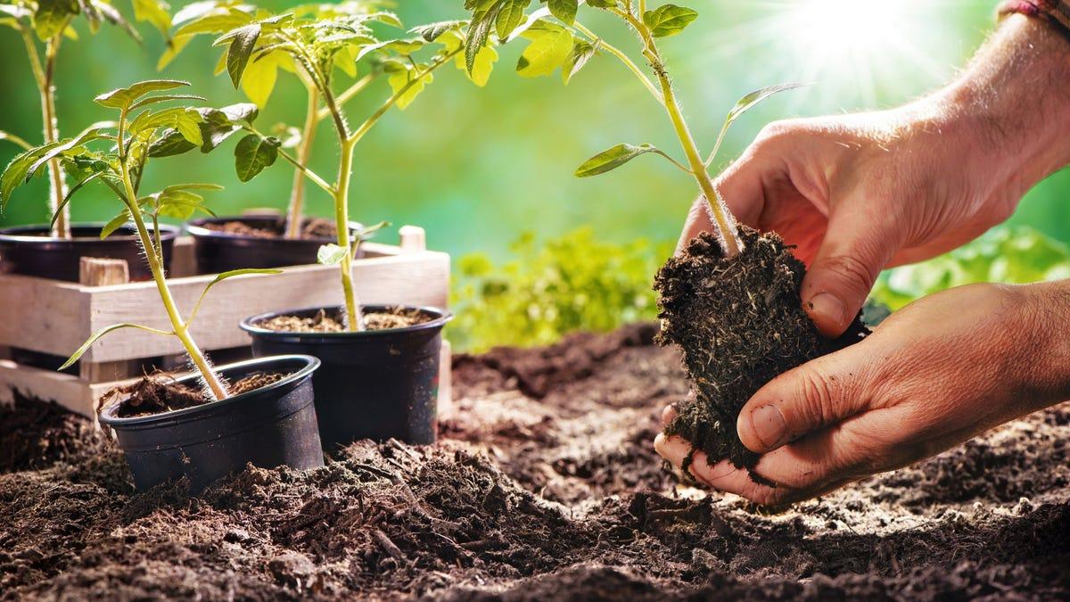Gardening boom set to blossom next year – Country Gardener